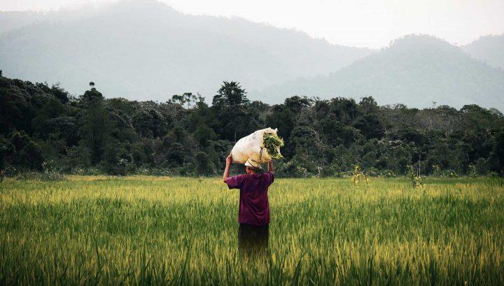 Biobauern in Drittweltländern verwenden vielfach manuelle Arbeit - Photo by Pat Whelen from Pexels