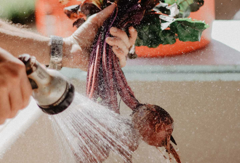 Frisches Gemüse aus dem Garten -  Photo by Ava Motive from Pexels