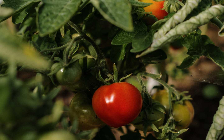 Geheimnisse für erfolgreichen ökologischen Gartenbau