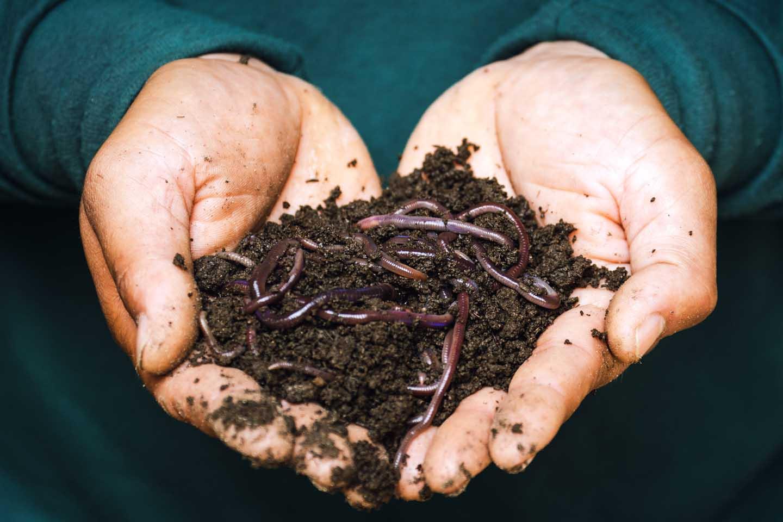 Biologische Erde mit Regenwürmern - Foto von Sippakorn Yamkasikorn from Pexels