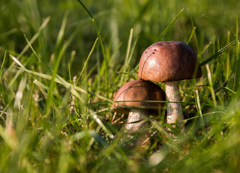 Pilze können mehr als wir ahnen